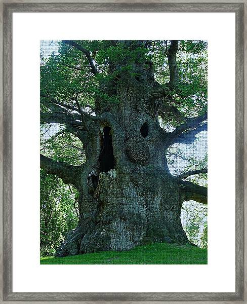 Old Man Tree Framed Print