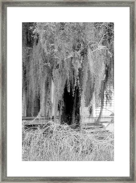 Old Moss Down Home Framed Print