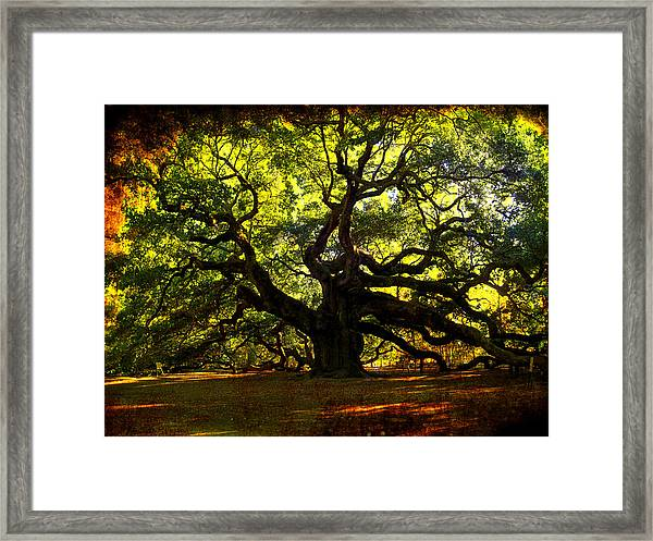 Old Old Angel Oak In Charleston Framed Print