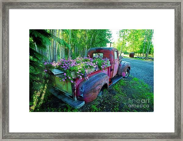 Old Pickup Truck As Flower Bed Framed Print