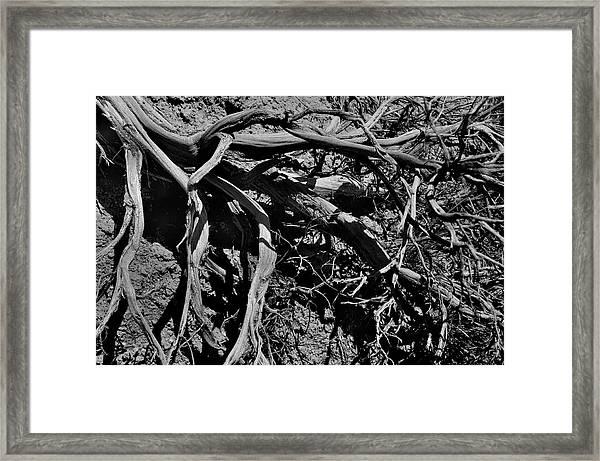 Old Sagebrush Framed Print