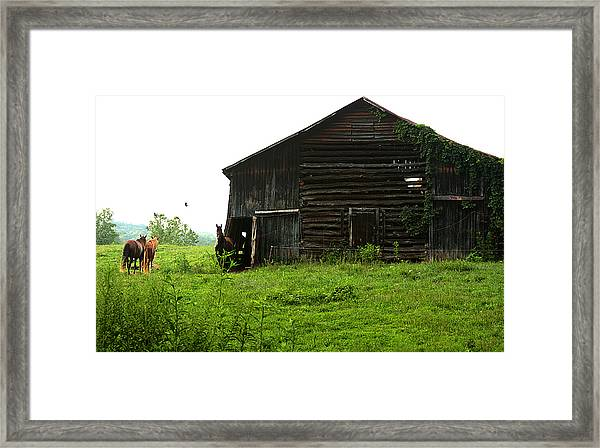 Old Stable And Horses Framed Print