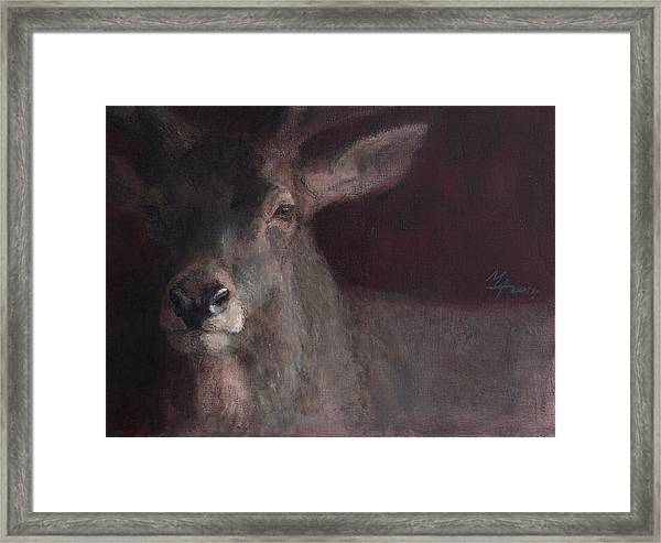 Old Stag Framed Print