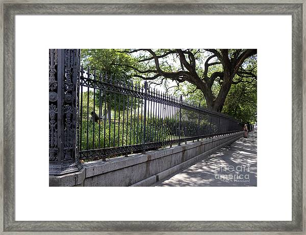 Old Tree And Ornate Fence Framed Print