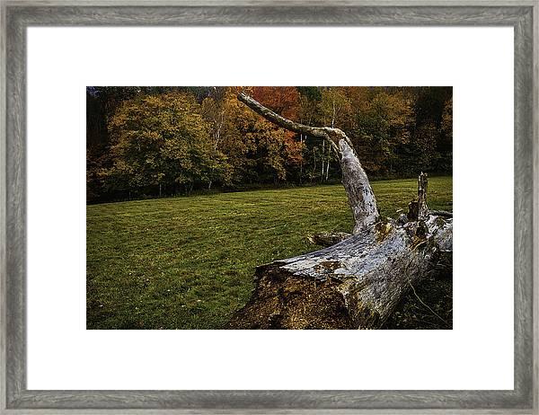 Old Tree Trunk Framed Print