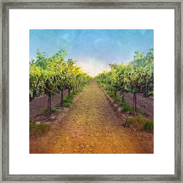 Old #vineyard Photo I Rescued From My Framed Print