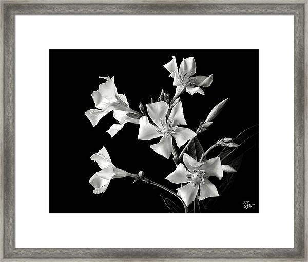 Oleander In Black And White Framed Print