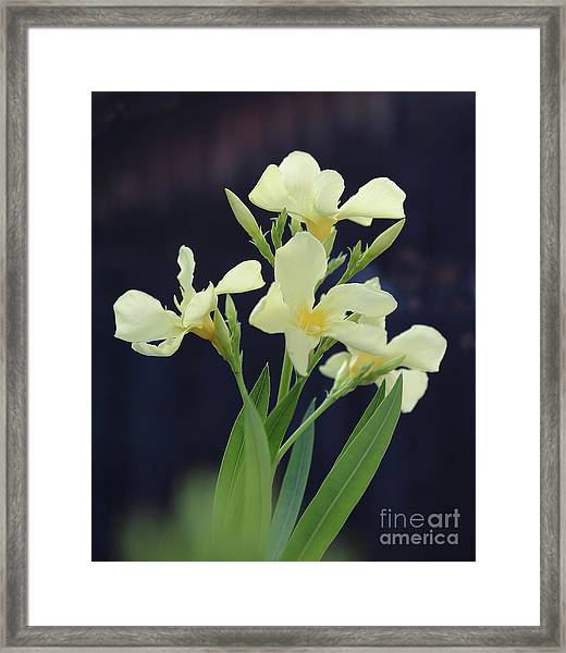 Oleander Marie Gambetta 2 Framed Print