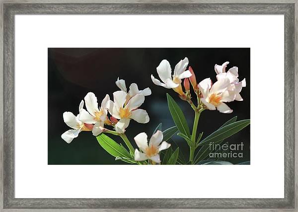 Oleander Petite Salmon 2 Framed Print