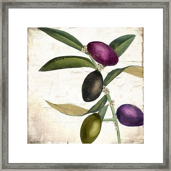 Olive Branch Iv Framed Print