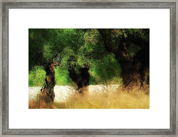 Olive Forest Framed Print by Svetlana Peric