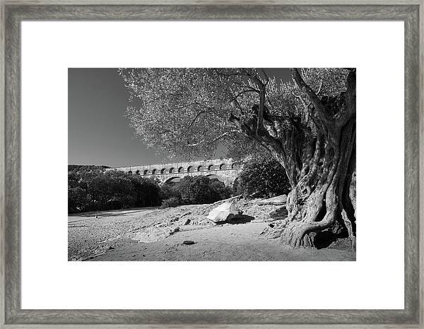 Olive Tree And Pont Du Gard, France Framed Print