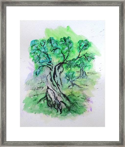 Olive Tree Grove Framed Print