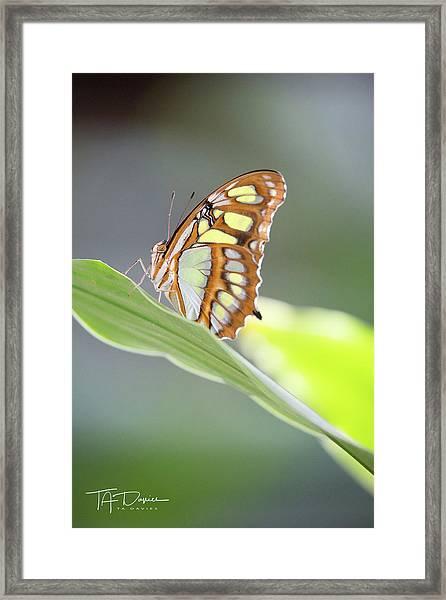 On A Leaf Framed Print