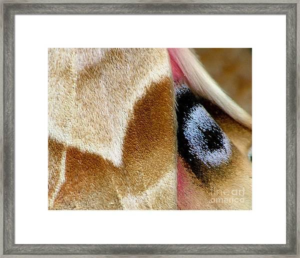 On Fragile Moth's Wings Framed Print