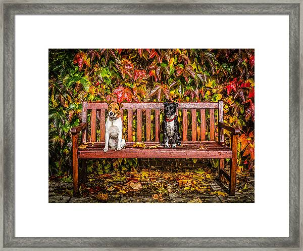 Framed Print featuring the photograph On The Bench by Nick Bywater