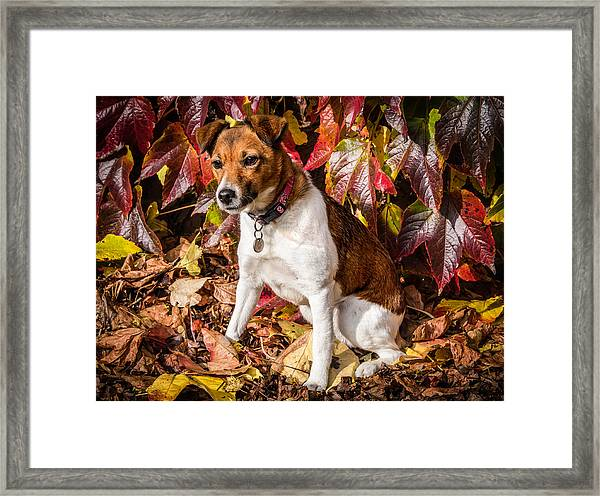 Framed Print featuring the photograph On The Leaves by Nick Bywater