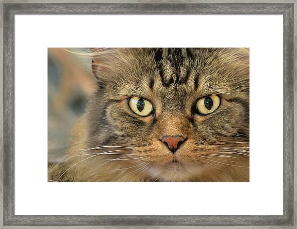 On The Prowl Framed Print