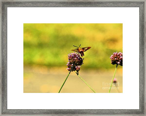 On The Wings Of Love Framed Print