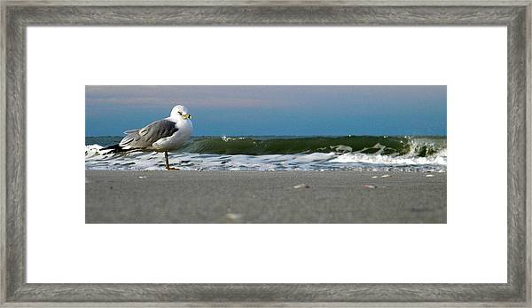 One Bird At A Time Framed Print
