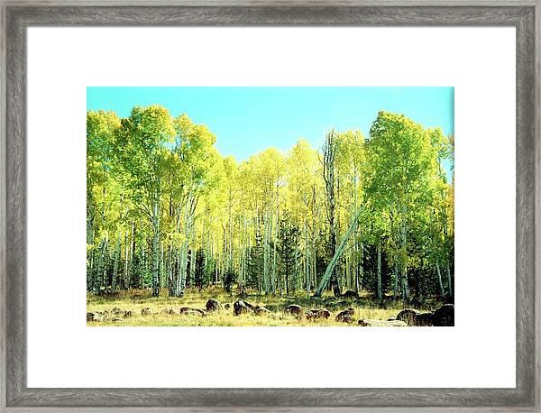 One Drunk Tree Framed Print