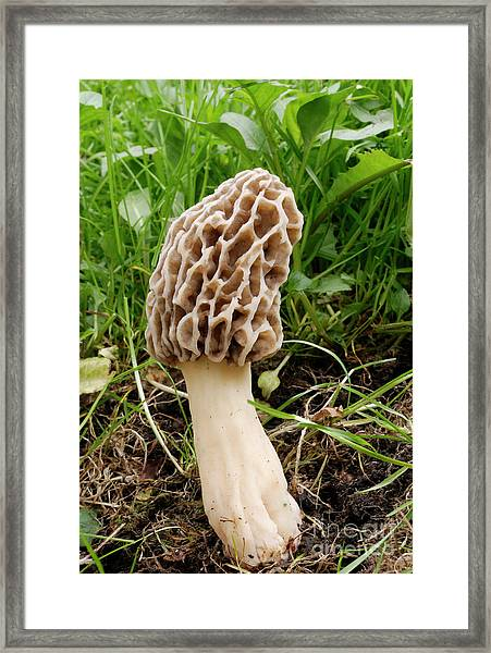 One Fine Morel Framed Print