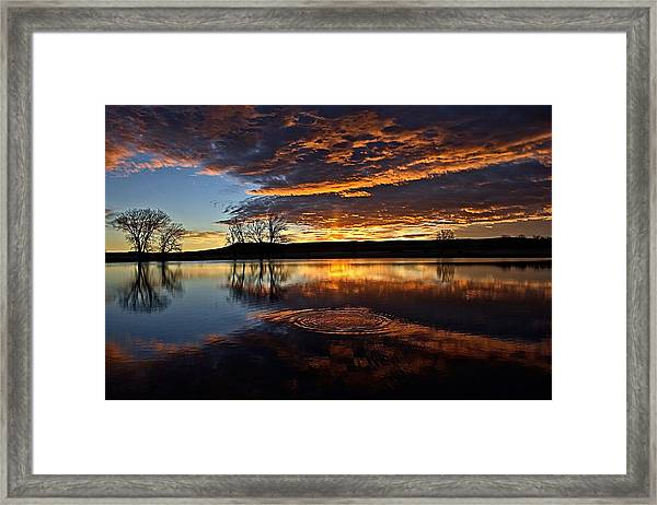 One Fish Jumps Framed Print