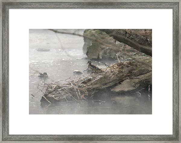 One Little Ducky Framed Print