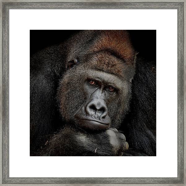 One Moment In Contact Framed Print