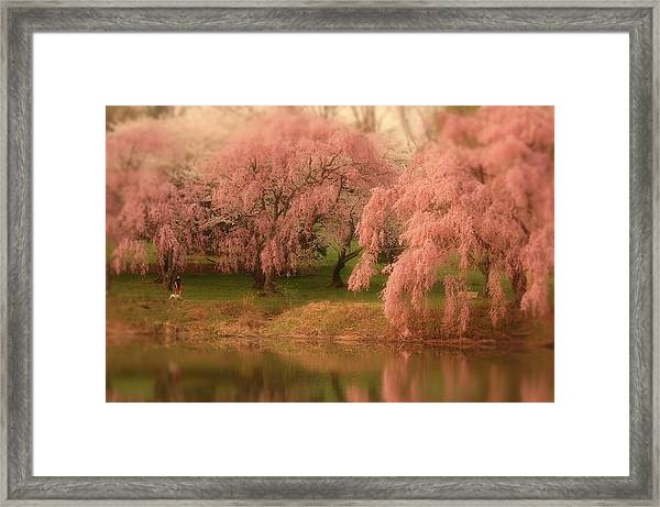 One Spring Day - Holmdel Park Framed Print