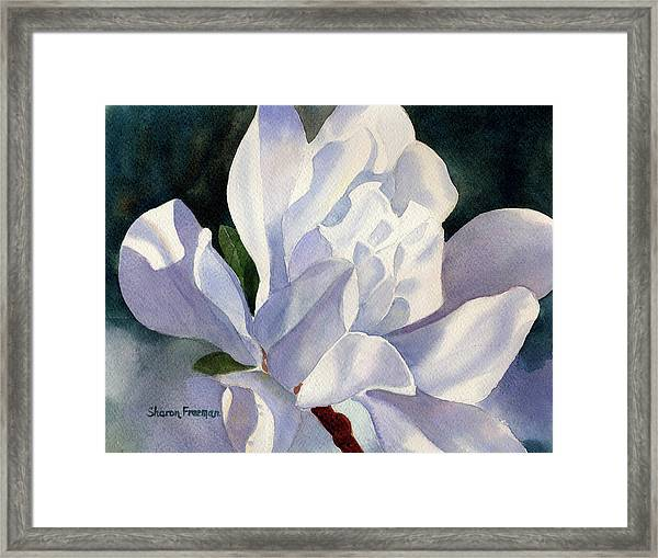 One Star Magnolia Blossom Framed Print