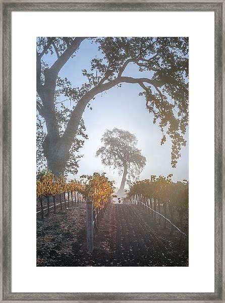 Opolo Vineyard Framed Print by Joseph Smith