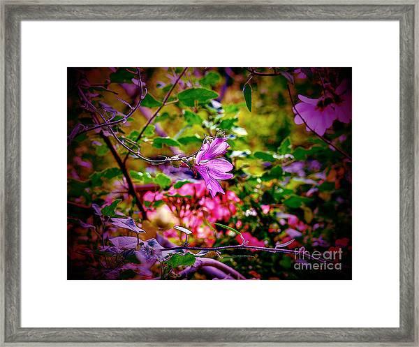 Opulent Lily Framed Print