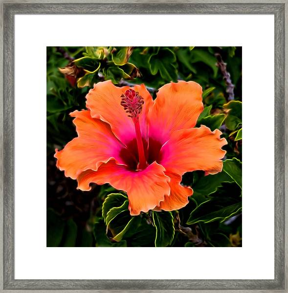 Orange And Pink Hibiscus 2 Framed Print