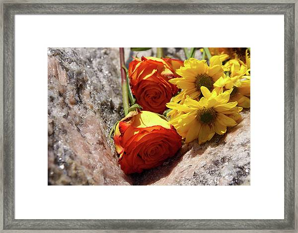 Orange And Yellow On Pink Granite Framed Print