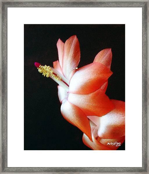 Orange Christmas Cactus Framed Print