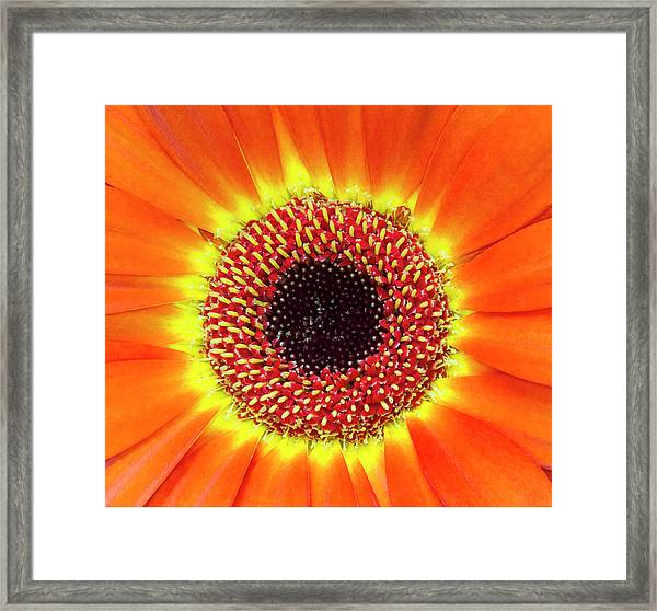 Framed Print featuring the photograph Orange Flower Macro by Bob Slitzan