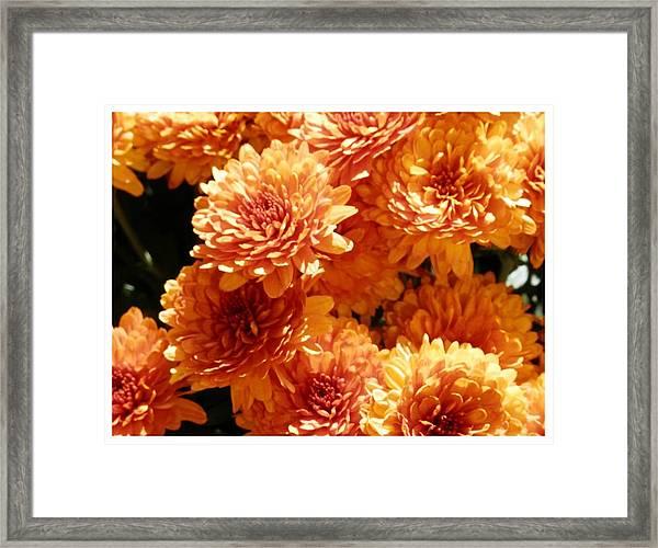 Orange Glory Framed Print