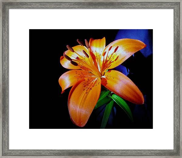 orange Glow Framed Print