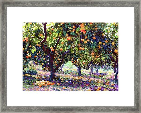 Orange Grove Of Citrus Fruit Trees Framed Print