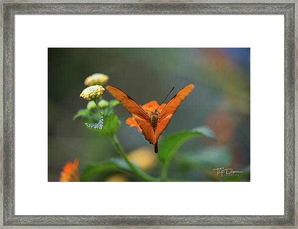 Orange Is The New Butterfly Framed Print