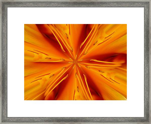 Orange Marmalade Framed Print