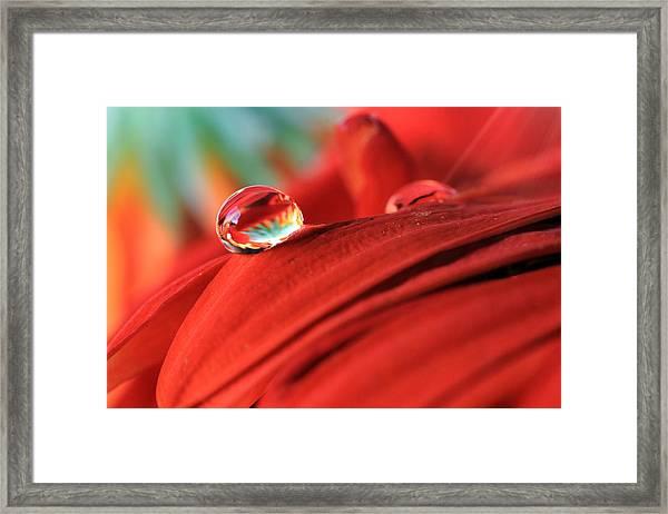 Orange Petals And Water Drops Framed Print