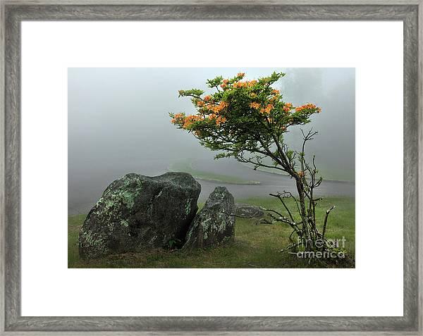 Orange Rhododendron In The Blue Ridge Framed Print by Dan Carmichael