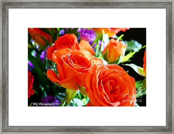 Orange Rose Framed Print