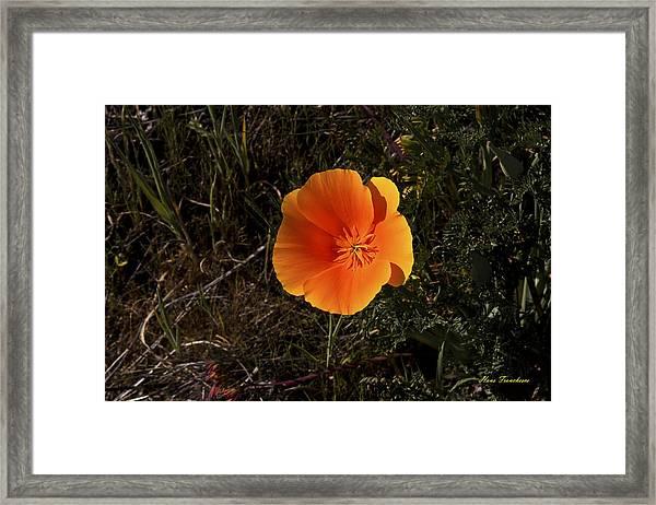 Orange Signed Framed Print