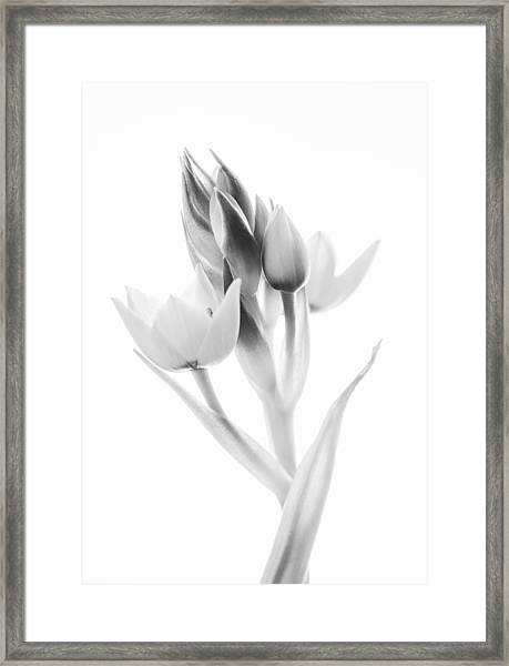 Orange Star - Fine Art Wall Decor Framed Print