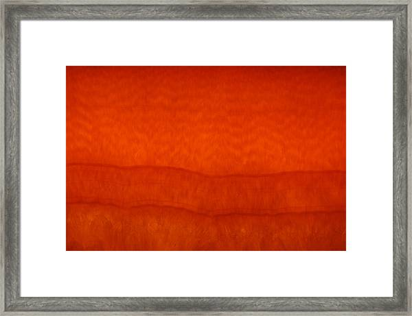 Orange Stone 3 Framed Print