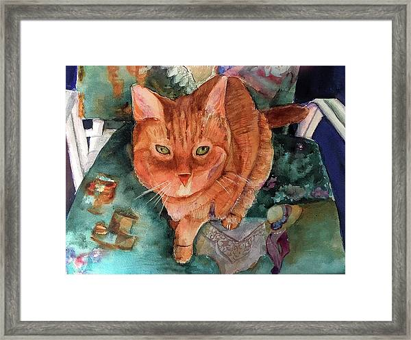 Orange Tabby Framed Print