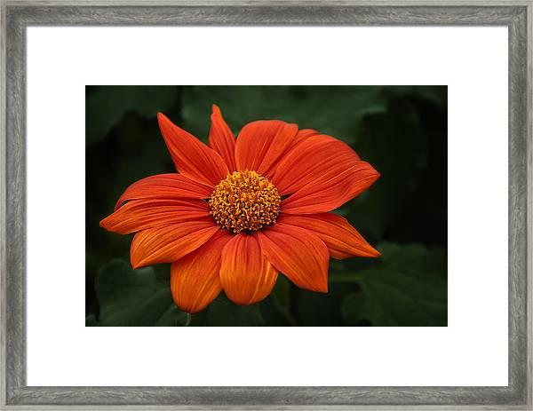 Orange You Pretty Framed Print